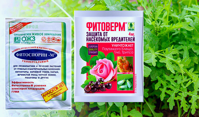 Возможные препараты от вредителей рукколы