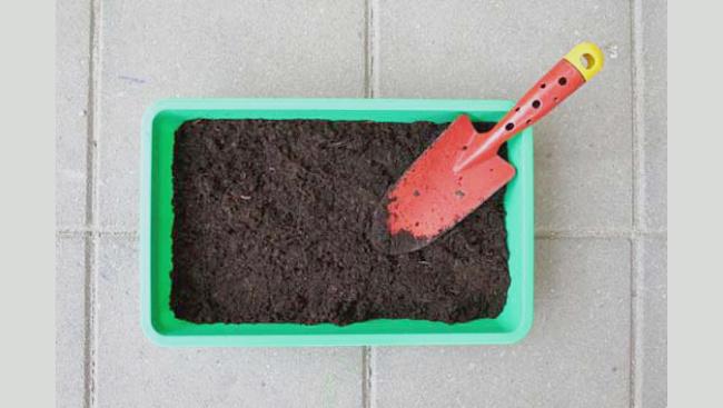 Подойдет простая земля с огорода