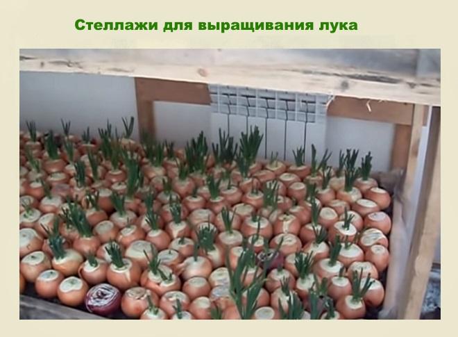 Стеллажи для выращивания лука