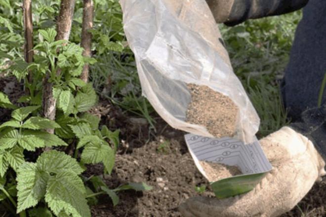 Минеральное удобрение для малины
