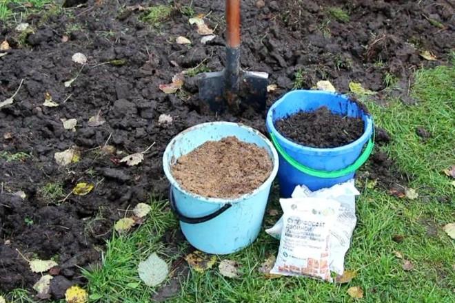 Органические удобрения для малины