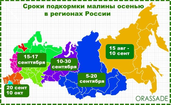 Сроки подкормки малины осенью по регионам России