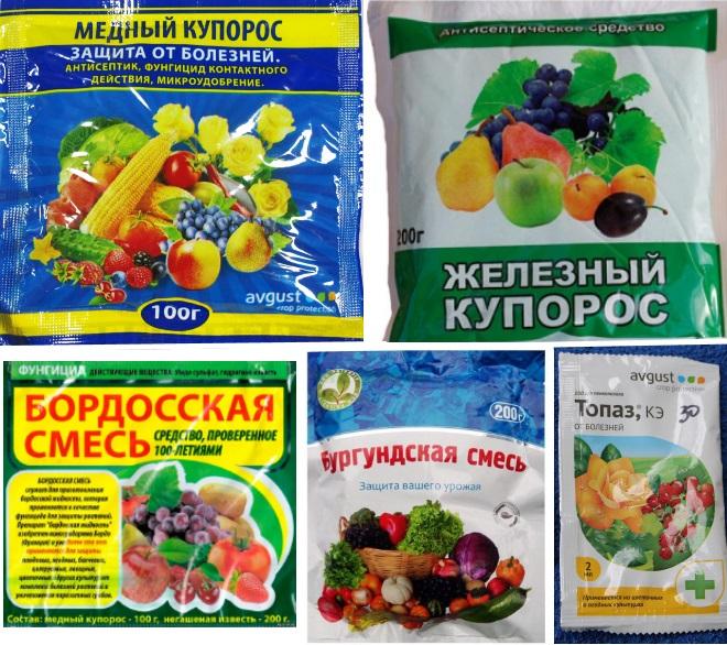 Фунгициды для обработки смородины