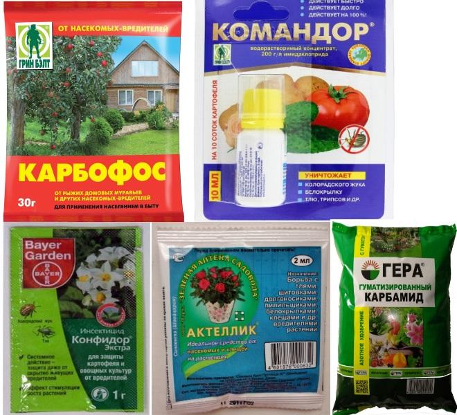 Инсектициды для смородины
