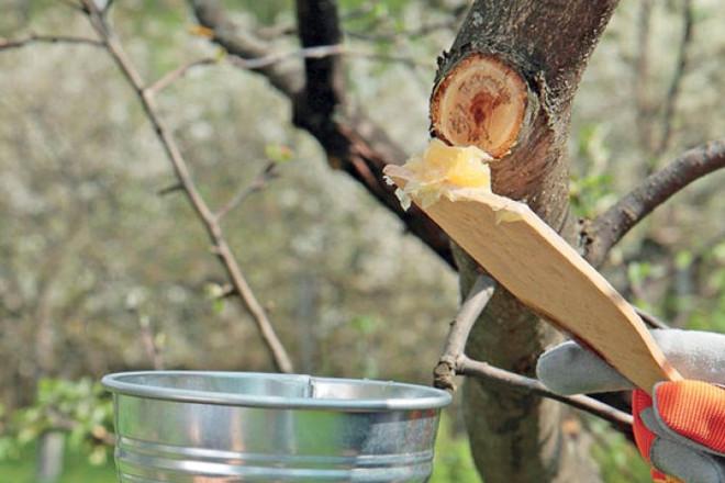 Садовый вар для яблони