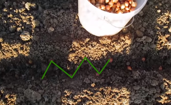 Смешанная схема посадки лука севка