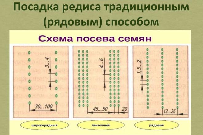 Схема посева редиса