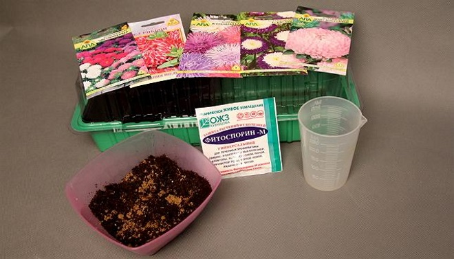 Подготовка семян астр