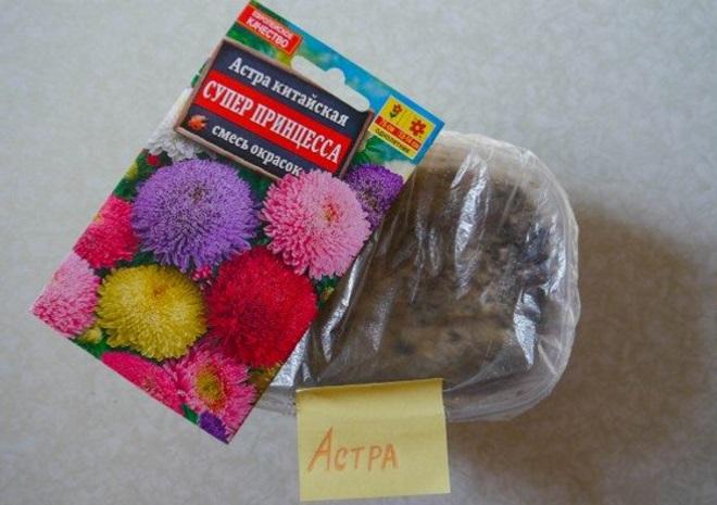 Посев семян астры