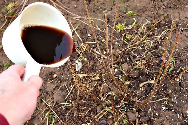 Органические удобрения для смородины