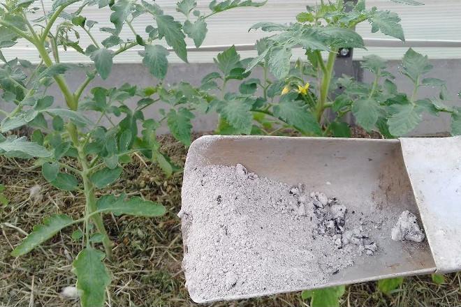 Органические удобрения для помидор