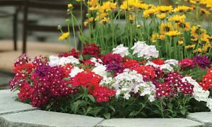 Какие цветы сажать на рассаду в марте: список цветов по регионам