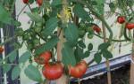 Чем подкормить помидоры после высадки в теплицу: удобрения, народные средства
