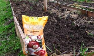 Чем удобрить землю перед посадкой чеснока осенью