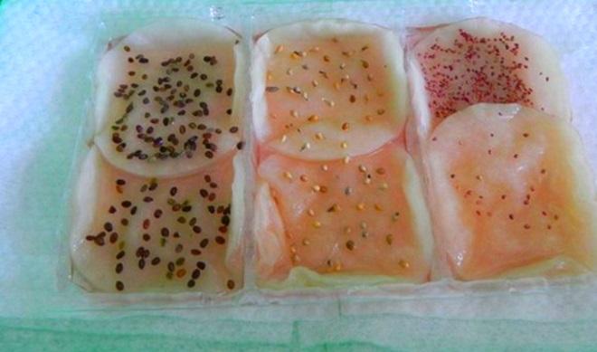 Семена клубники на ватных дисках