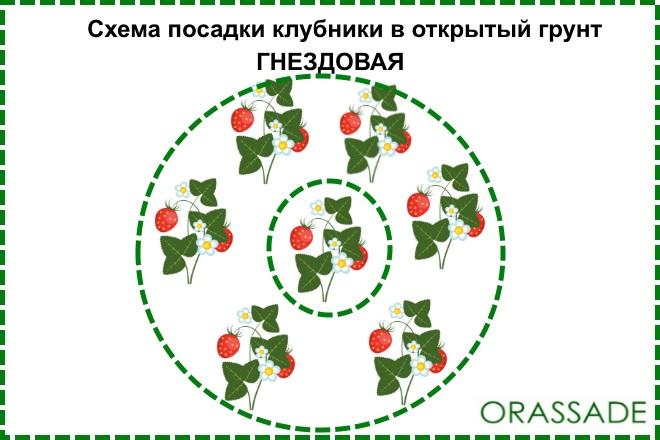 Схема посадки гнездовая