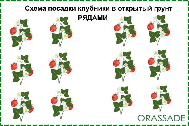 Схема посадки рядами