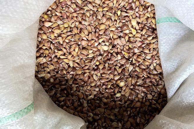 Мешок с семенами чеснока