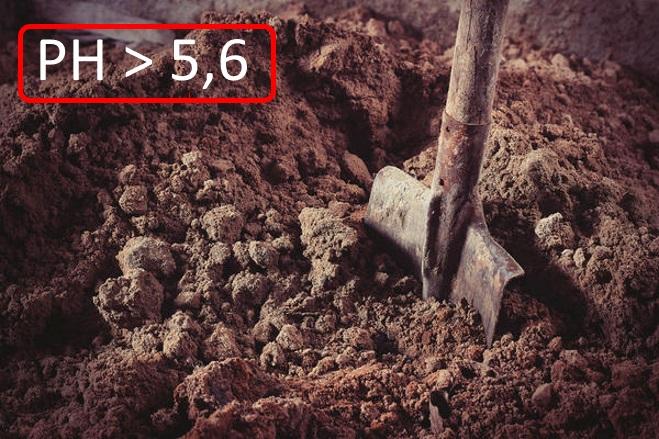 Кислотность почвы для посадки
