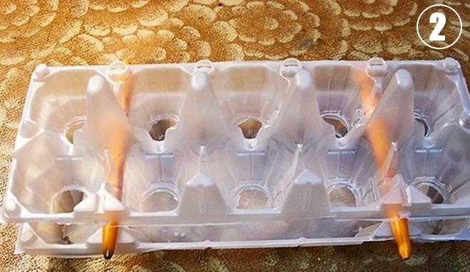Подготовка контейнера от яиц к посадке луковиц