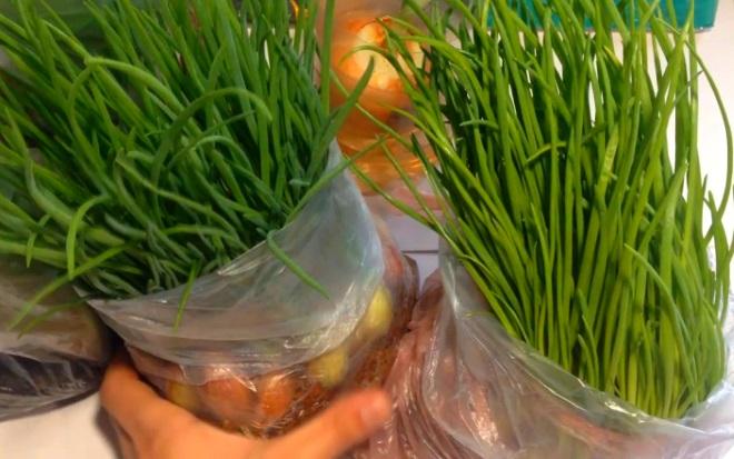 Выращивание лука в полиэтиленовом пакете