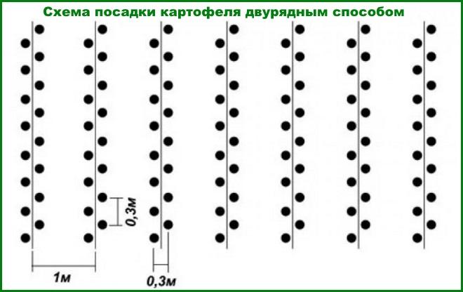 Схема посадки картофеля двурядный способ