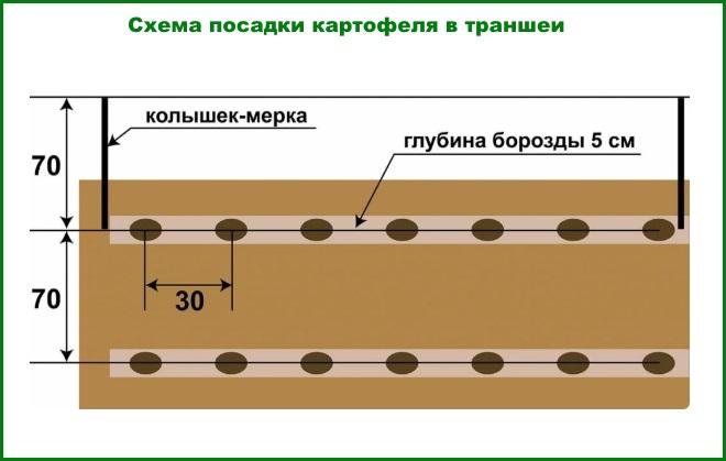 Схема посадки картофеля в траншеи
